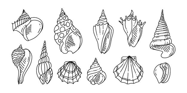 Conjunto de doodle de concha do mar. vários conchas do mar em contorno. desenhado à mão.