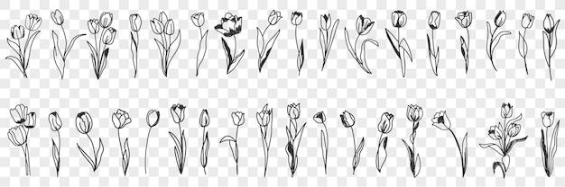 Conjunto de doodle de decoração de flores de tulipa