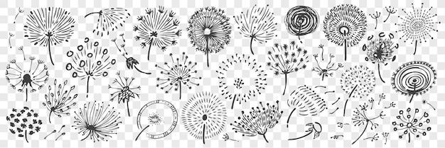 Conjunto de doodle de dente de leão mão desenhada.