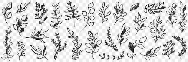 Conjunto de doodle de padrão natural de folhas