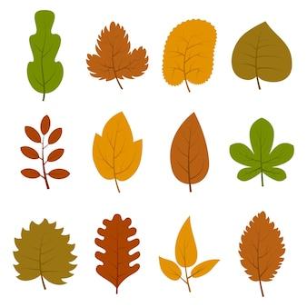 Conjunto de doze folhas de outono diferentes, isoladas no fundo branco. ilustração vetorial.