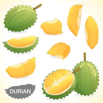 Conjunto de durian em vários formatos de vetor de estilos