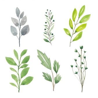 Conjunto de elemento de folha verde na ilustração aquarela