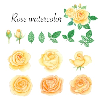 Conjunto de elementos aquarela rosas.