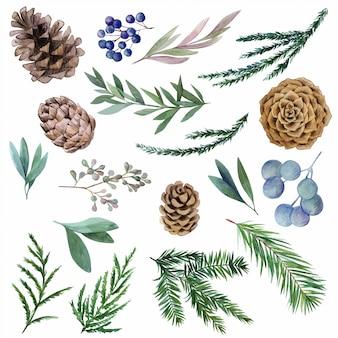 Conjunto de elementos botânicos em aquarela de inverno, abeto e cones