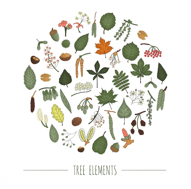 Conjunto de elementos coloridos da árvore isolado no fundo branco, emoldurado em círculo. folhas coloridas de bétula, bordo, carvalho, rowan, castanha, avelã, tília, olmo, álamo. conceito de floresta de estilo dos desenhos animados