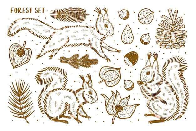 Conjunto de elementos da floresta, clipart. animais, natureza, plantas. esquilo, pinheiro, noz, ramo, semente, physalis, cereja de inverno. silhueta.