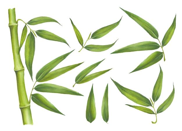 Conjunto de elementos de bambu isolado no branco