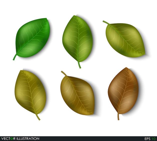 Conjunto de elementos de diferentes tons de folhas