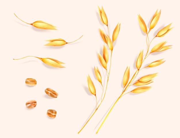 Conjunto de elementos de espiga e grãos de trigo