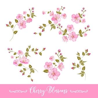 Conjunto de elementos de flores da primavera