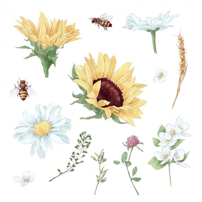 Conjunto de elementos de girassóis e flores silvestres em estilo aquarela digital
