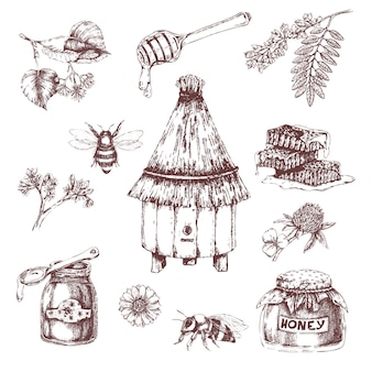 Conjunto de elementos de mel desenhados à mão