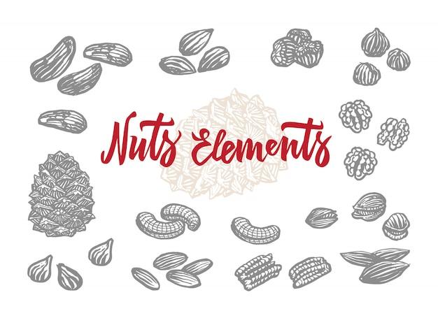Conjunto de elementos de nozes desenhadas à mão