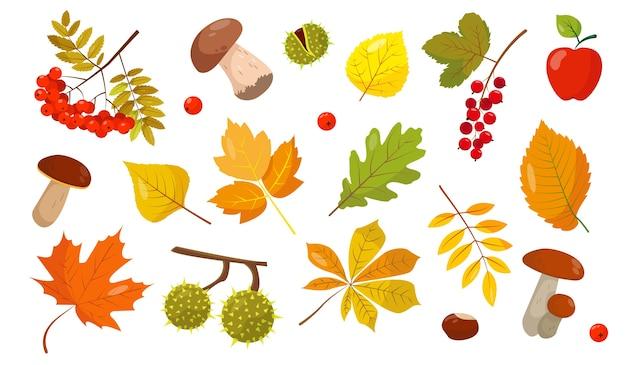 Conjunto de elementos de outono. folhas, cogumelos e frutas em fundo branco para o outono. ilustração.