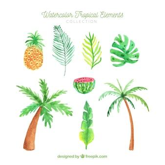 Conjunto de elementos de verão com plantas e frutas em estilo aquarela
