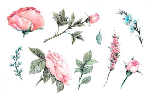 Conjunto de elementos do vetor realista linda de rosas vermelhas