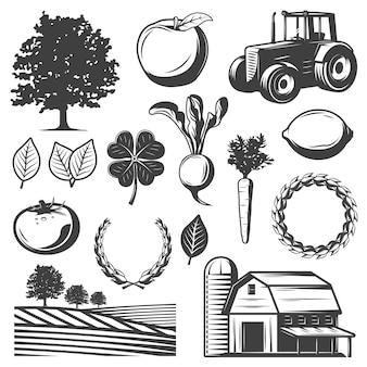 Conjunto de elementos naturais vintage