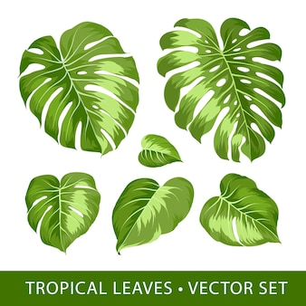 Conjunto de elementos tropicais da folha monstera.