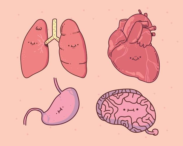 Conjunto de entranhas de kawaii. coração, pulmão, fígado e cérebro