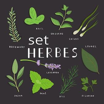 Conjunto de ervas aromáticas. conjunto de ervas e especiarias frescas. ilustração vetorial