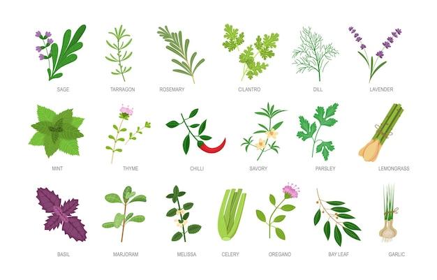 Conjunto de ervas comestíveis com inscrição de nomes. ingredientes alimentares botânicos saudáveis e especiarias