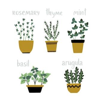 Conjunto de ervas culinárias de vetor em vasos.