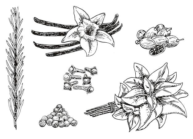 Conjunto de ervas e especiarias culinárias de mão desenhada de tinta