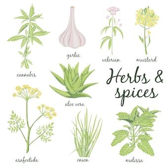 Conjunto de ervas e especiarias desenhadas à mão