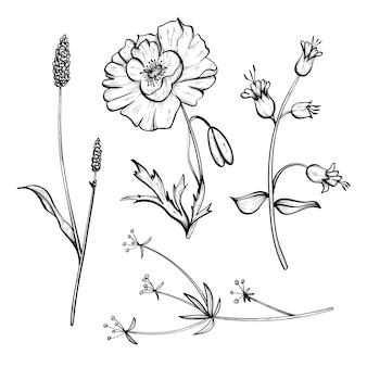 Conjunto de ervas e flores silvestres de mão realista