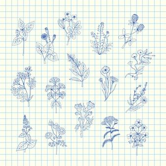 Conjunto de ervas medicinais de mão desenhada na folha de célula azul