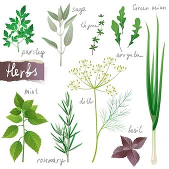 Conjunto de ervas
