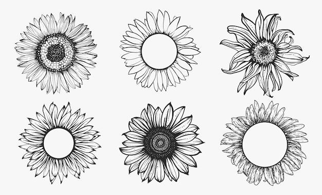 Conjunto de esboço de girassol. contorno desenhado de mão. ilustração.