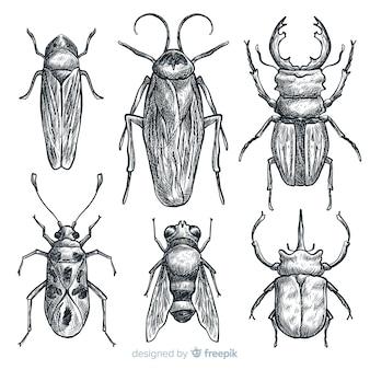 Conjunto de esboço de insetos desenhada mão realista