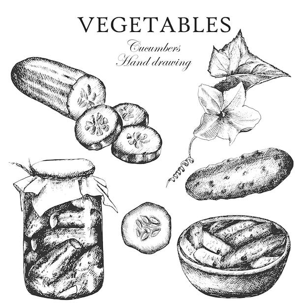 Conjunto de esboço de pepinos, ilustração. pote de pepinos. desenho à mão.