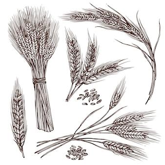 Conjunto de esboço de trigo