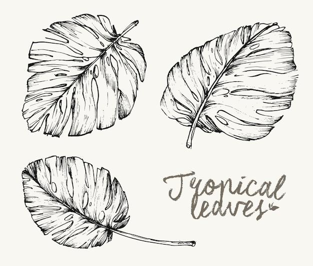 Conjunto de esboço desenhado à mão de folhas tropicais botânicas de verão para o fundo do modelo padrão