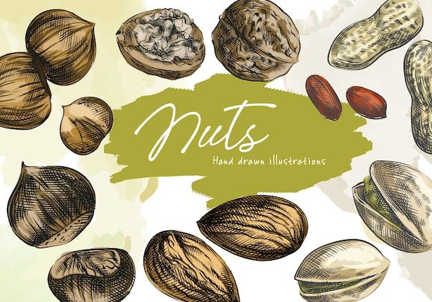 Conjunto de esboço desenhado à mão em aquarela colorida de nozes. o conjunto inclui amendoins descascados, amêndoas, avelãs, nozes, nozes abertas com casca, amendoim com casca, pistache, avelã descascada