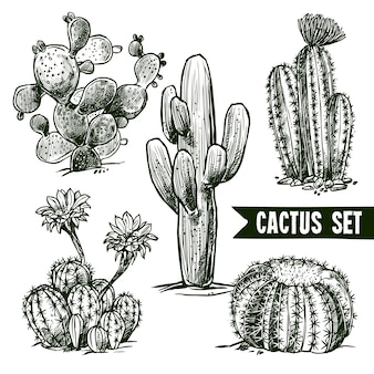 Conjunto de esboços cactus