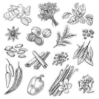 Conjunto de esboços de especiarias