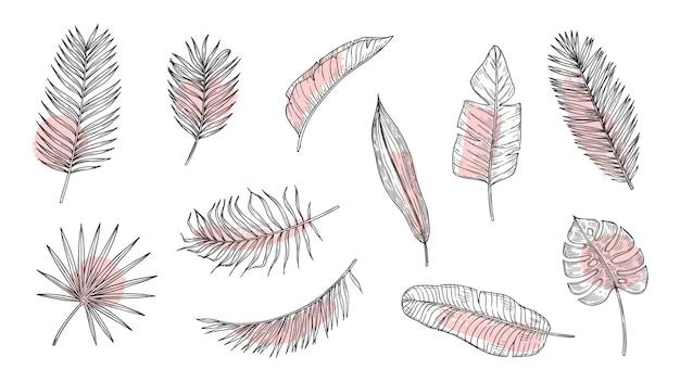Conjunto de esboços de folhas tropicais