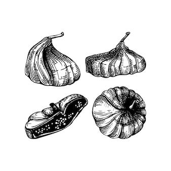Conjunto de esboços de frutas secas de figo desenhado à mão. figo desidratado vintage em estilo gravado. sobremesa deliciosa fruta saudável. ilustrações realistas de doces orientais.