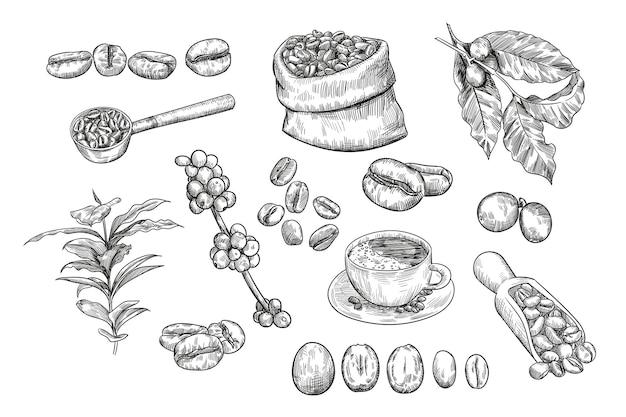 Conjunto de esboços de grãos de café