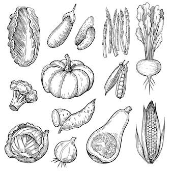 Conjunto de esboços de vegetais frescos