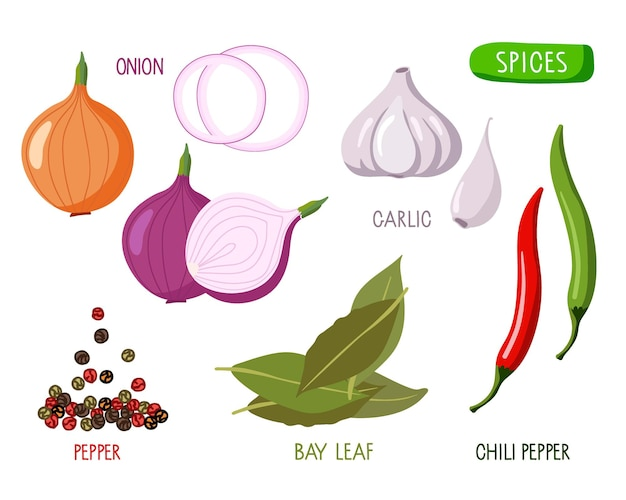 Conjunto de especiarias e vegetais picantes coleção de raízes frescas e especiarias secas com inscrições