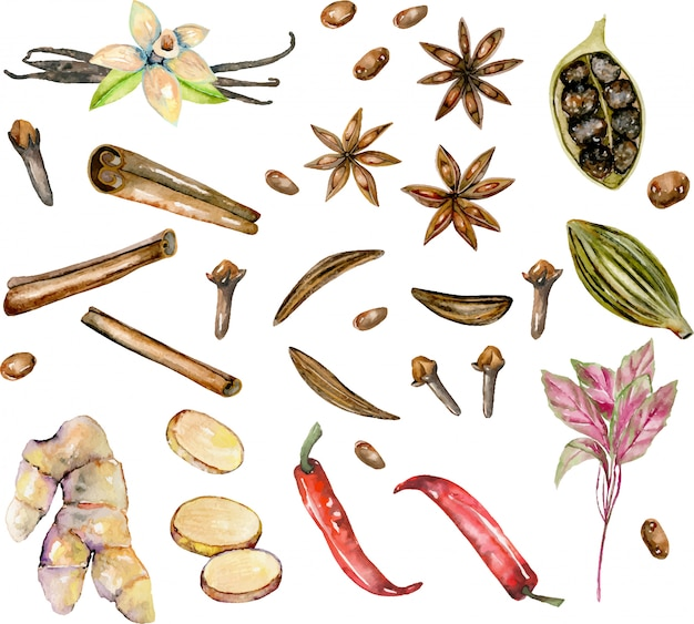 Conjunto de especiarias em aquarela