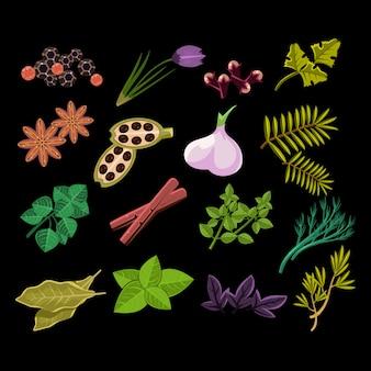 Conjunto de especiarias. ilustração.