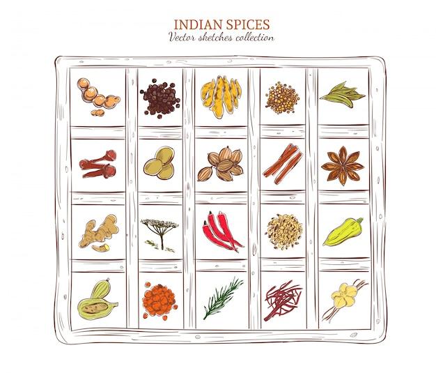 Conjunto de especiarias indianas de esboço colorido