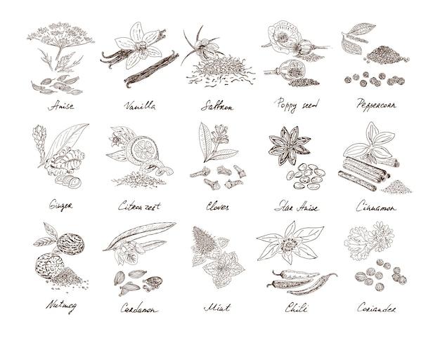 Conjunto de especiarias naturais desenhadas à mão