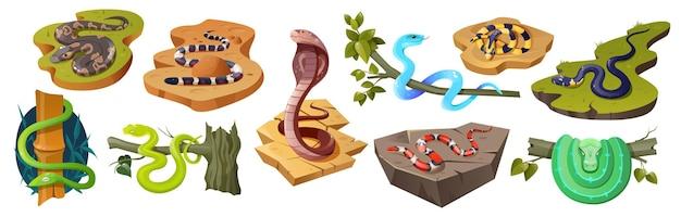 Conjunto de espécies de cobra de desenho animado